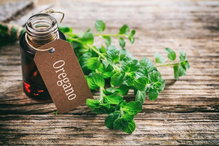 oregano is a classic herb