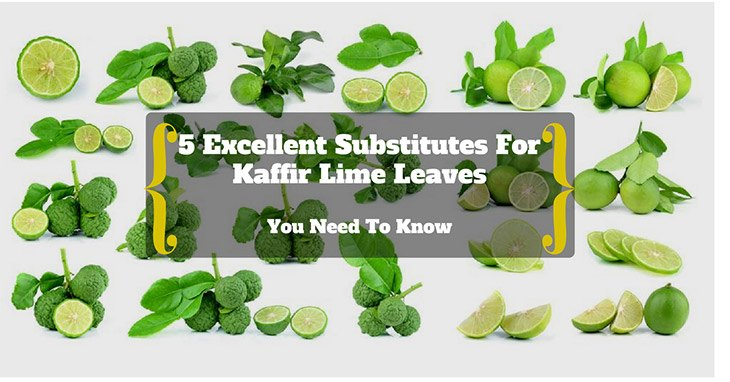 List of Kaffir Lime Leaves alternative