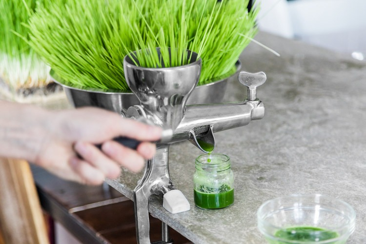 best wheatgrass juicer richard pantry
