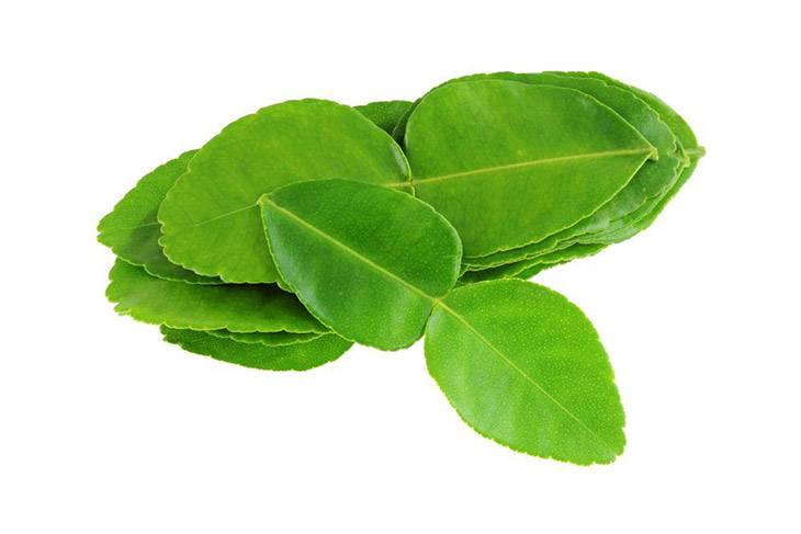 a lot citrus leaves can substitute for kaffir lime leaves