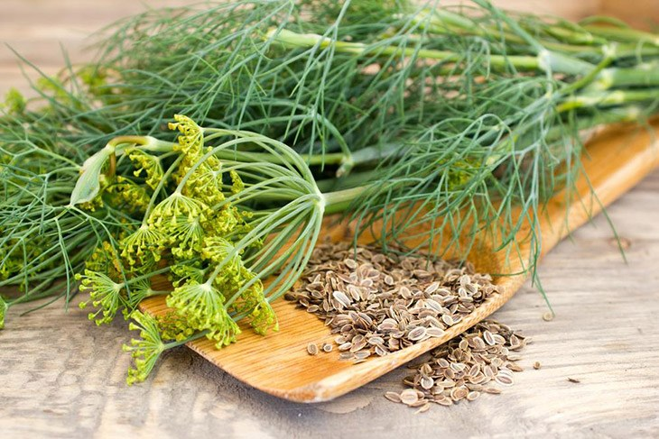 What Are The Best Substitute For Celery Seed 24