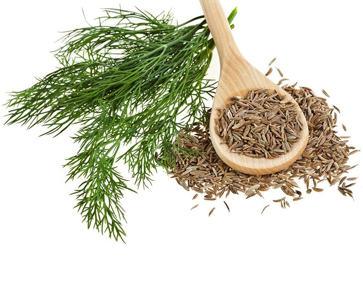 What Are The Best Substitute For Celery Seed 30