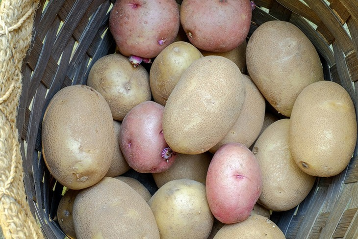 russett potatoes is popular food to replace mushroom