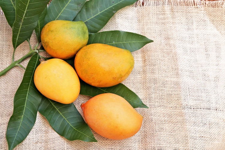 mango-is-a-citrus-fruit