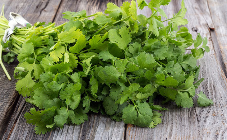 what is coriander and benefit