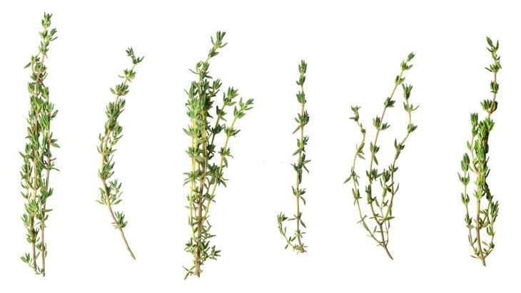 what is sprig of thyme