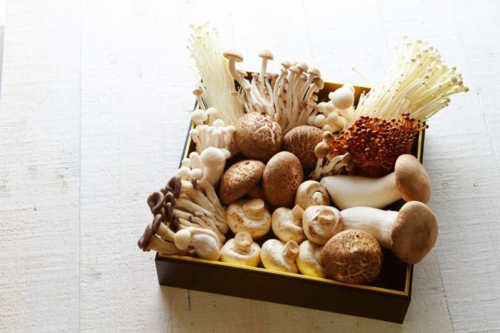 What are the characteristics of mushrooms
