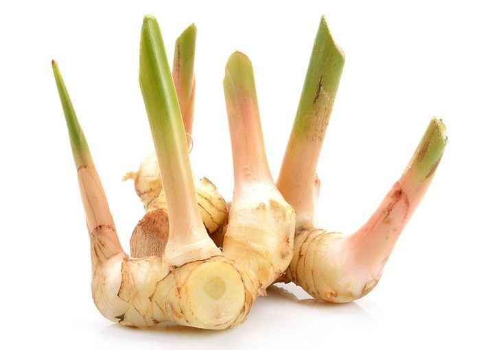 substitute for galangal