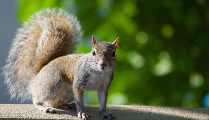 Do People Eat Squirrels